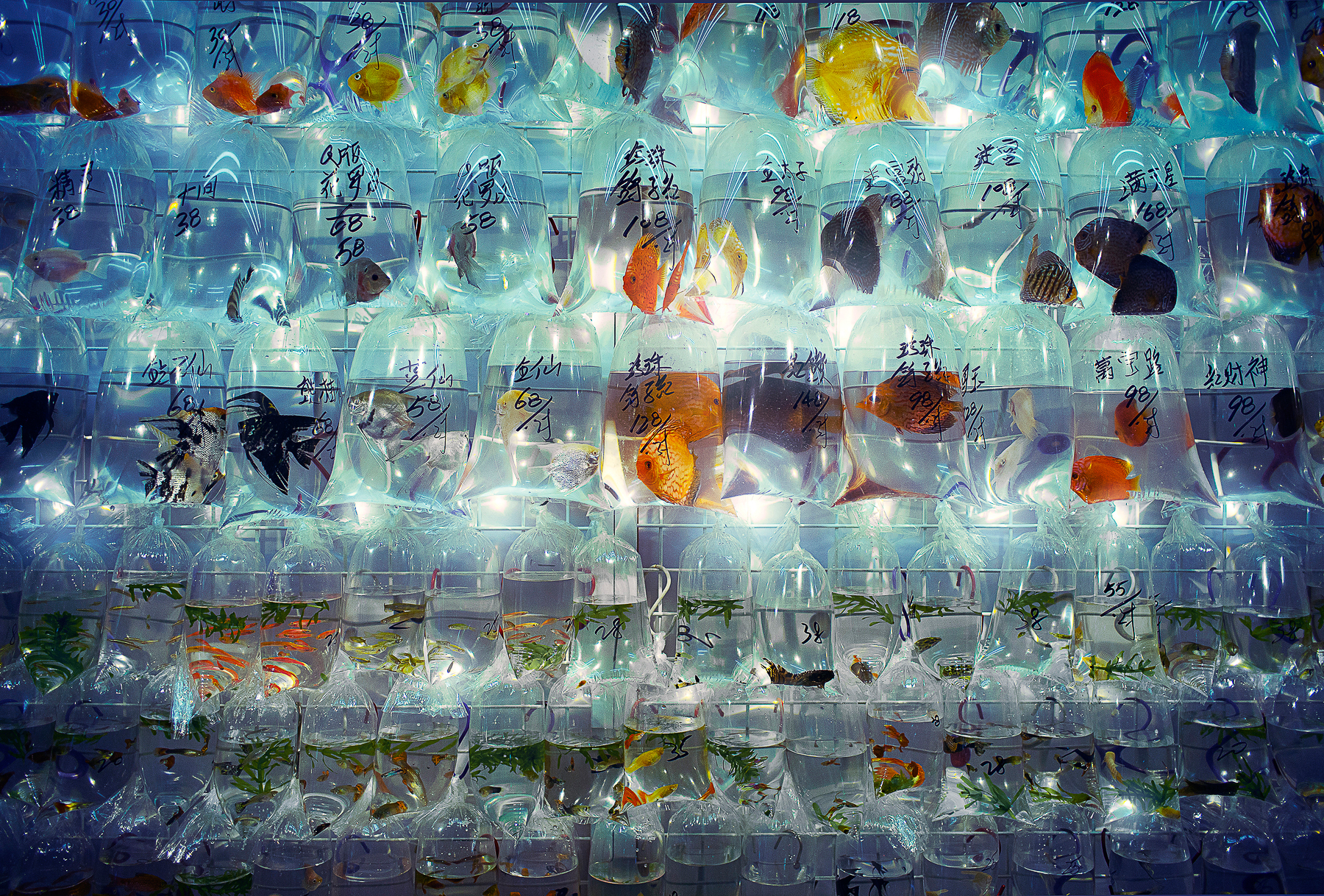 Hong Kong - Fish Store